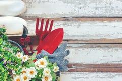 Vue supérieure sur faire du jardinage une pelle remplie d'outil mis en pot de sol et de fleurs pendant le printemps d'été de jard image libre de droits