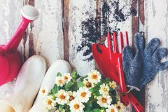 Vue supérieure sur faire du jardinage une pelle remplie d'outil mis en pot de sol et de fleurs pendant le printemps d'été de jard photos libres de droits