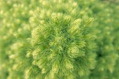 Vue supérieure verte d'arbre de sapin ou de Noël Photographie stock