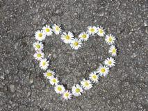 Vue sup?rieure Vue sup?rieure Bouquet en forme de coeur de fleurs de marguerite sur la route Perennis de Bellis photo libre de droits