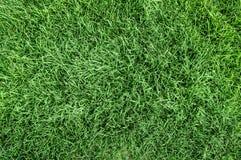 Vue sup?rieure de fond d'herbe verte images libres de droits