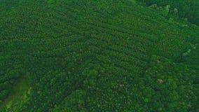 vue sup?rieure et a?rienne Les arbres verts trapus se déplacent lentement Longueur de bourdon 4K clips vidéos