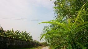 Vue supérieure de belles feuilles Image libre de droits