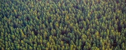 Vue supérieure de forêt Images libres de droits