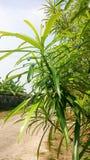 Vue supérieure des belles feuilles 1 Photos libres de droits