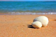 Vue sur des seashells sur la plage photo libre de droits