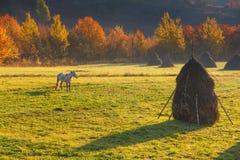 Vue sur des vallées de montagne d'automne, arbres avec les feuilles colorées et chevaux de pâturage Image stock