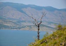 Vue sur l'arbre, la montagne et le lac Baikal, Sibérie Été photographie stock libre de droits