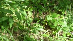 Vue sur l'herbe marchant alors dans la forêt banque de vidéos