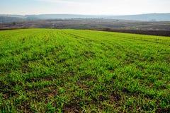 Vue sur le champ de maïs de ferme avec l'herbe verte et le sol dans la campagne avec des collines d'automne sur le fond Photo libre de droits
