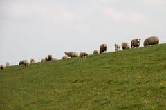 Vue sur le groupe de moutons se tenant sur un secteur d'herbe sous un ciel nuageux dans l'emsland Allemagne de rhede photographie stock