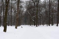 Vue sur le parc en hiver Nature noire et blanche en hiver Images stock