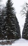 Vue sur le parc en hiver Nature noire et blanche en hiver photos stock
