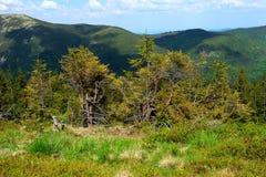 Vue sur le passage de montagne Photo libre de droits