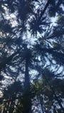 Vue sur les arbres photo libre de droits