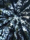 Vue sur les arbres images stock