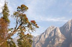 Vue sur les montagnes et l'arbre au Népal images stock