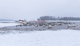 Vue sur les oiseaux et les bateaux emprisonnés sur la rivière congelée Danube Images stock