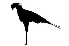 Vue sur les silhouettes d'un secrétaire Bird Images libres de droits