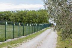 Vue sur un grand verger olive organique photo stock