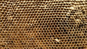 Vue sur un nid d'abeilles, plan rapproché Image stock