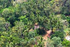 Vue sur une jungle Image stock