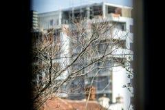 Vue symbiotique de branche de bâtiment et d'arbre photos libres de droits