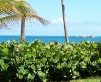 Vue tropicale d'une propriété locative Images stock