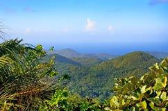 Vue tropicale de forêt en île de Seyshelles Images stock