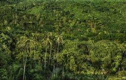 Vue tropicale de jungle de forêt tropicale Paysage images stock