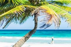 Vue tropicale et palmiers de bord de la mer au-dessus de mer de turquoise à la plage sablonneuse exotique en mer des Caraïbes Images stock