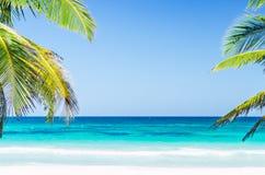 Vue tropicale et palmiers de bord de la mer au-dessus de mer de turquoise à la plage sablonneuse exotique en mer des Caraïbes Image libre de droits