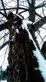 Vue unique d'un arbre neigeux photos stock