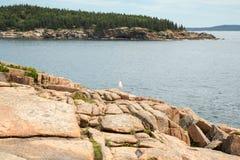 Vue vers la crique de Newport en parc national d'Acadia Image libre de droits