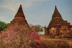 Vue vers les pagodas antiques avec des fleurs en Bagan Myanmar Burma Photographie stock