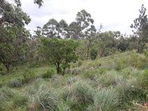 Vue verte naturelle d'environnement d'endroit de roche d'Ella belle au Sri Lanka photo stock