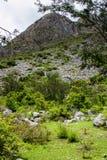 Vue verticale de la jungle sauvage des Andes photo libre de droits