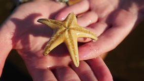 Vue vivante de plan rapproché d'étoiles de mer banque de vidéos