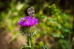 vuele de la flor para florecer y para recoger el polen raro Fotos de archivo libres de regalías