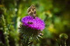 vuele de la flor para florecer y para recoger el polen raro Imagen de archivo