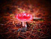 Vuele el agárico en el piso del bosque fotografía de archivo