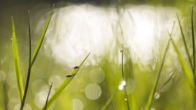 Vuele en la hierba de la mañana con descensos de rocío Imagen de archivo libre de regalías