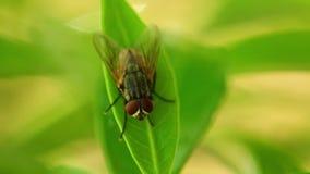 Vuele en un insecto animal estático macro de la hoja HD almacen de video