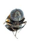 Vuele la abeja Imagenes de archivo