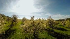 Vuele sobre la opinión aérea del verano del fondo de la naturaleza de las plantas de los árboles de la primavera almacen de video