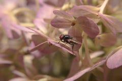 Vuele sostenerse encendido florece con cierre encima de la visión detallada Fotografía de archivo libre de regalías