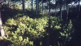 Vuele a través de Forest Trees, rayos del sol, luz almacen de metraje de vídeo