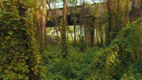 Vuele a través de los matorrales cerca del puente metrajes