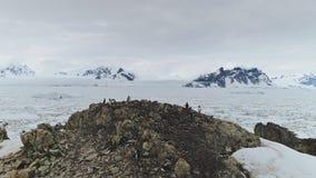 Vuelo aéreo de la Antártida sobre el océano del hielo, pingüinos almacen de video