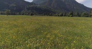 Vuelo aéreo del abejón sobre campo de hierba verde con las flores almacen de video